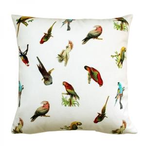 Parrots-Kirlent_6143_1